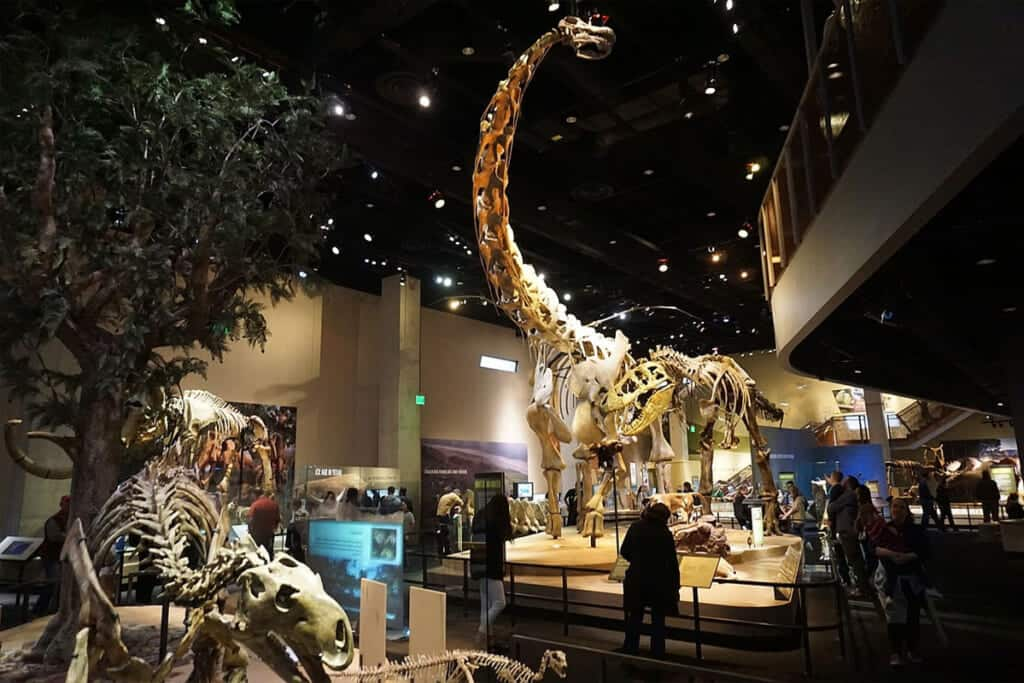 11 Family-Friendly Staycation Ideas In Dallas 2020 - 9. Perot Museum of Nature and Science